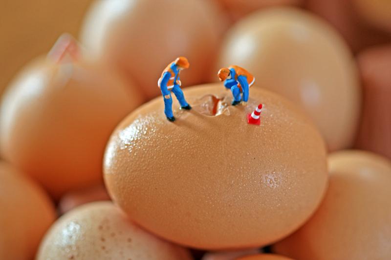 egg crack crew