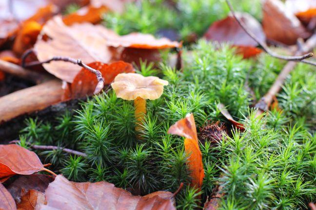 Der Herbst und seine Trompeten Ein emotionaler Trip zu